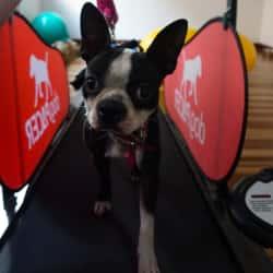 Pet Mark Club Boutique en Bogotá