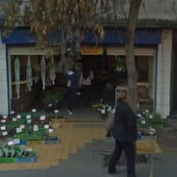 Plantas y Semillas Hugo  en Santiago