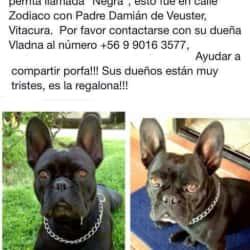 Pet Choice Apumanque en Santiago