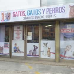 Gatos Gatos y Perro en Bogotá