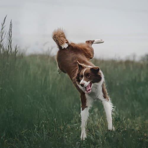 6 clases de entrenamiento canino $250.000