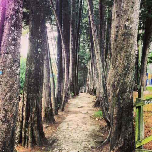 Parque Nacional Enrique Olaya Herrera en Bogotá 14
