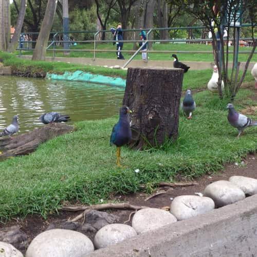 Parque Ciudad Montes en Bogotá 15
