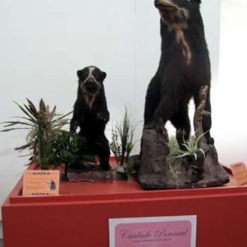 Museo De Historia Natura en Bogotá 4
