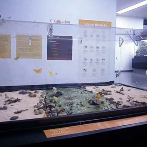 Museo De Historia Natura en Bogotá 6