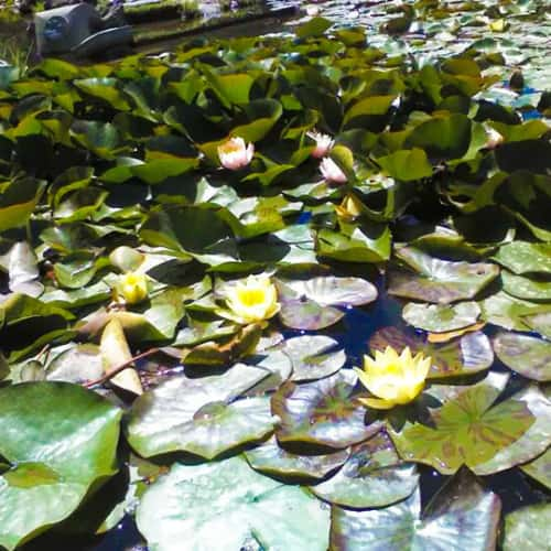 Jardín Japonés - Parque Metropolitano de Santiago en Bogotá 10