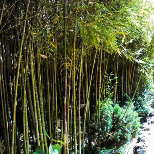 Jardín Japonés - Parque Metropolitano de Santiago en Bogotá 1