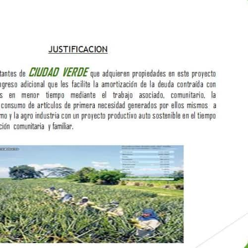 ONG Árbol Fuente de Vida en Bogotá 10