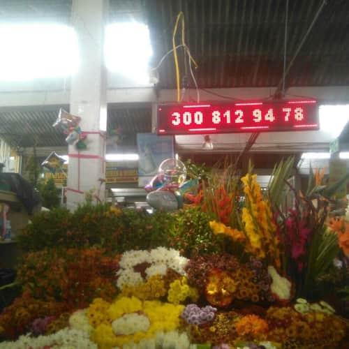 River Flowers en Bogotá 11