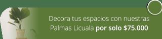 Decora tus espacios con nuestras Palmas Licuala por solo $75.000 - Marga Plantas