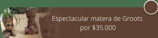 Espectacular matera de Groots por $35.000 - Catleya Arreglos Florales