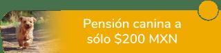 Pensión canina a sólo $200 MXN - Mascotas Y Accesorios Bulldog Veterinaria