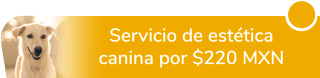 Servicio de estética canina por sólo $220 MXN - Clínica Veterinaria Akela