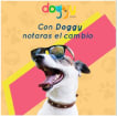 Doggy Club