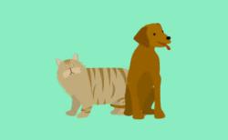 Guarderia Canina Huellitas