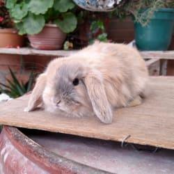 Criadero Conejos Para Todos