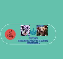 Maxbon servicios para la mascota consentida