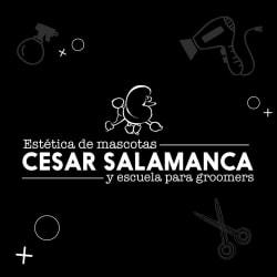 Estetica De Mascotas Cesar Salamanca