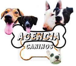 Agencia Caninos