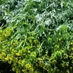 Plantas Sabogal