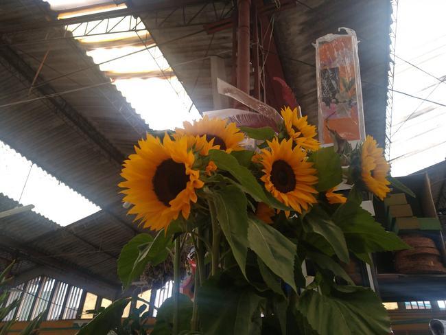 Flor girasol por unidad