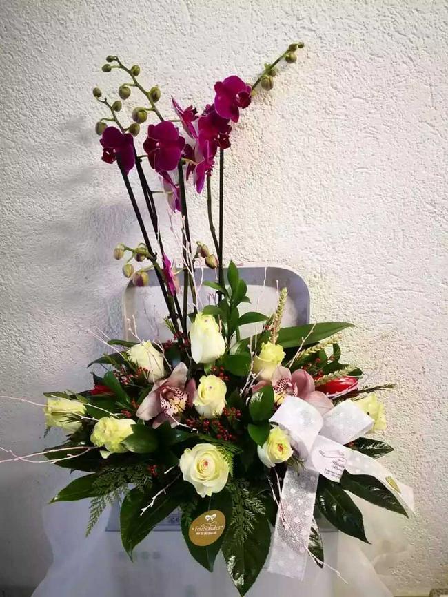 Hermosas plantas de orquídea arreglada
