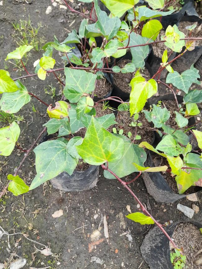 Unidad de Mayami plantas