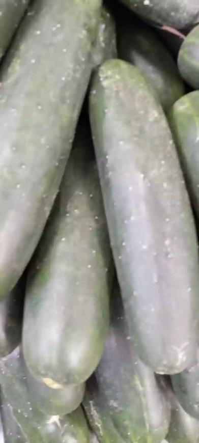 Libra de pepino cohombro