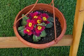 Maceta con flores de temporada.
