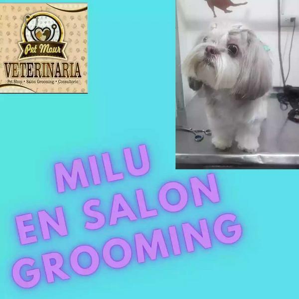 Grooming canino y felino