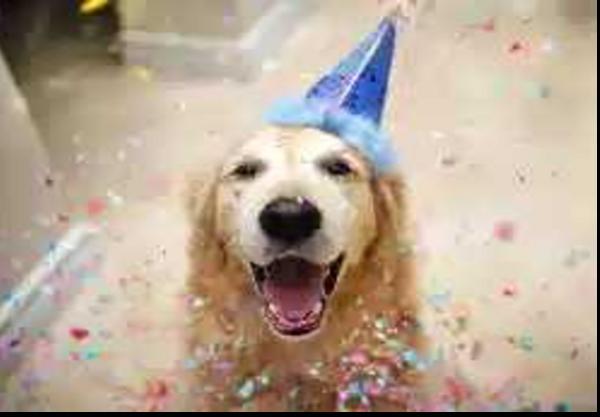 Combo: Celebra el cumpleaños de tu mascota