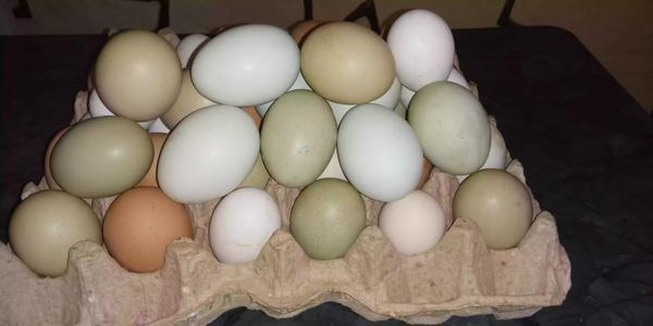 Cubeta de huevos criollos