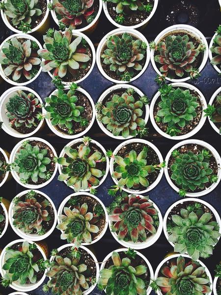 Proveedor de plantas para negocio