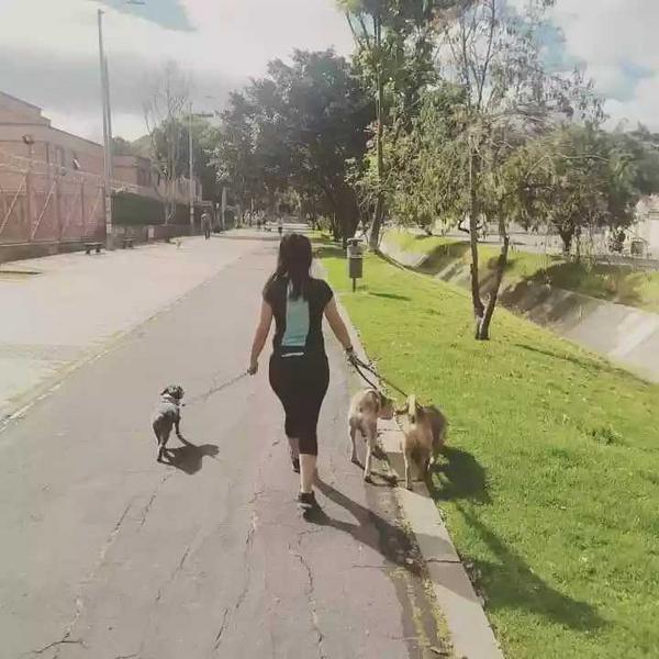 Paseo canino