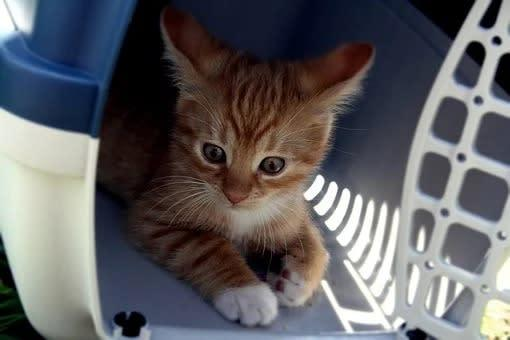 Transportador grande para gatos