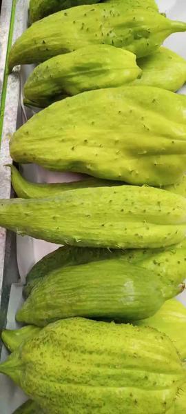 Pepino de guiso