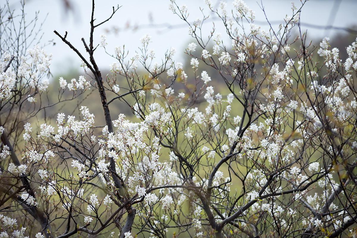 Flowers bloom near Cherry Hill, NJ