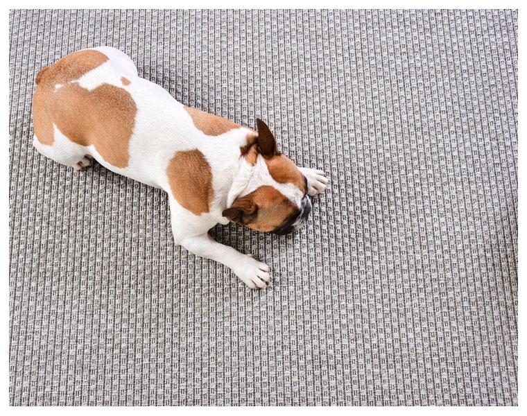 A escolha de tapetes pet friendly Lider