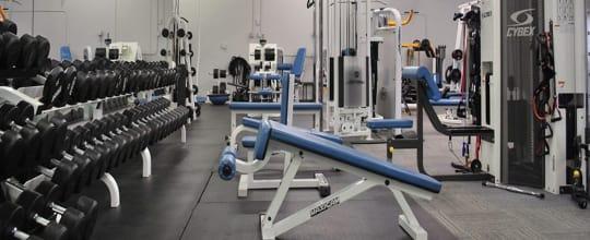 Customized Nutrition & Exercise