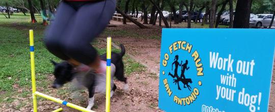 Go Fetch Run