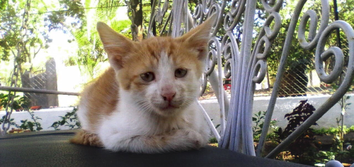 Peelu was by my side since his birth. His hobbies: eating your lunch and sleeping all day.