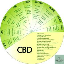 How CBD Oil can be used
