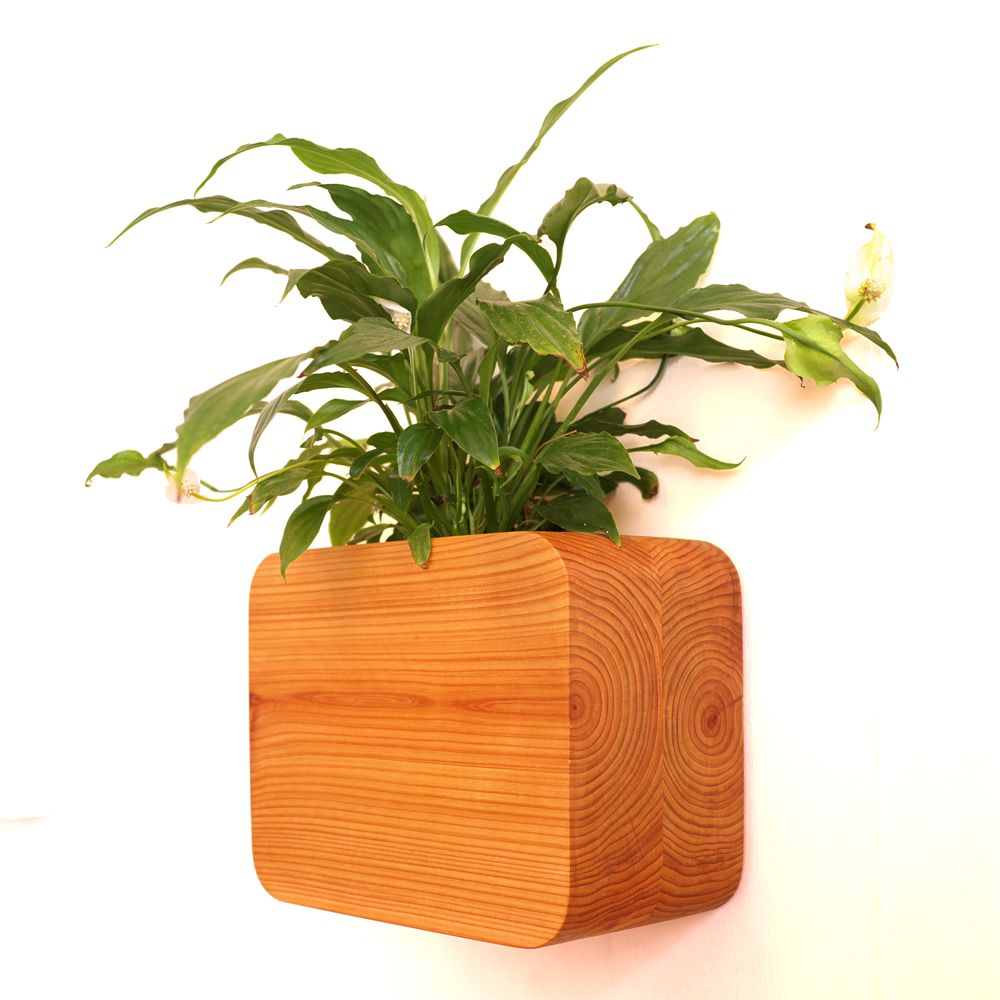 Wall mounted cedar planter Large,Tanti Design,Plant Pots,flower,flowerpot,grass,houseplant,leaf,plant