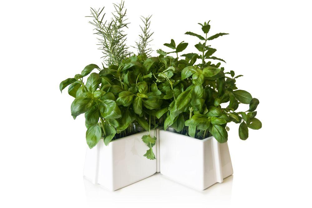 X Tray 5 Plant Pots Set by Vitamin
