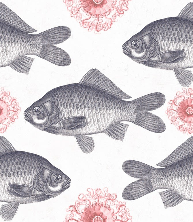 Mind The Gap,Wallpapers,fish,fish products,tilapia