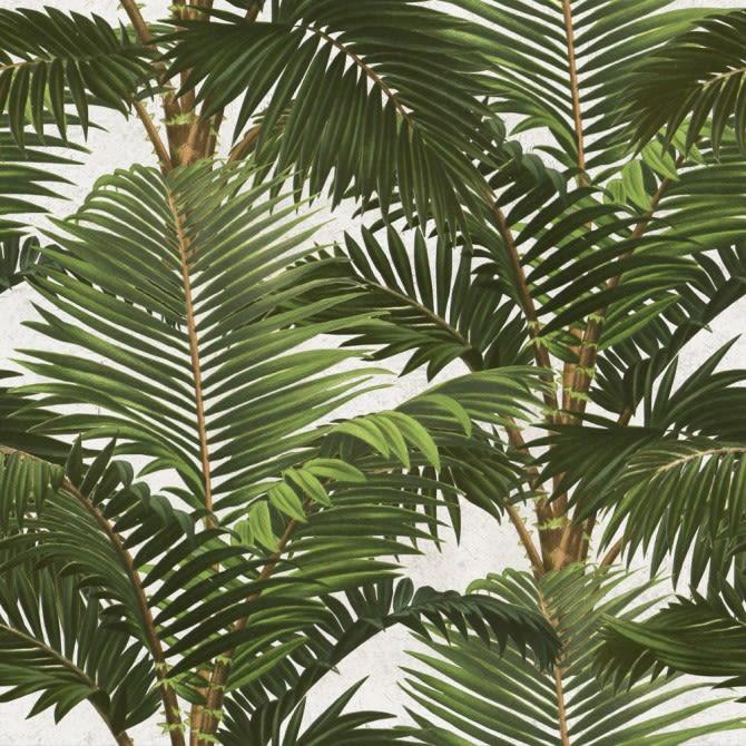 Mind The Gap,Wallpapers,arecales,attalea speciosa,botany,elaeis,flowering plant,leaf,organism,palm tree,plant,terrestrial plant,tree,vegetation,woody plant