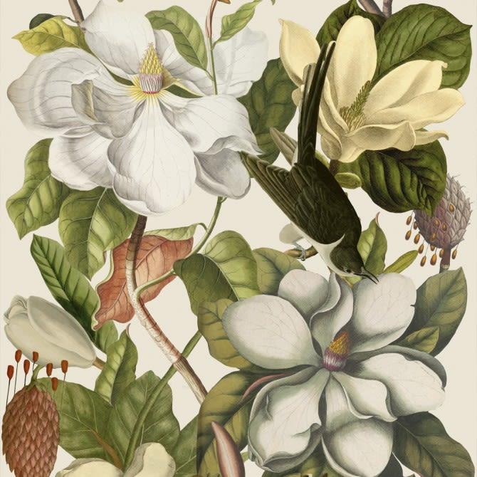 Mind The Gap,Wallpapers,botany,flower,flowering plant,illustration,petal,plant,trillium