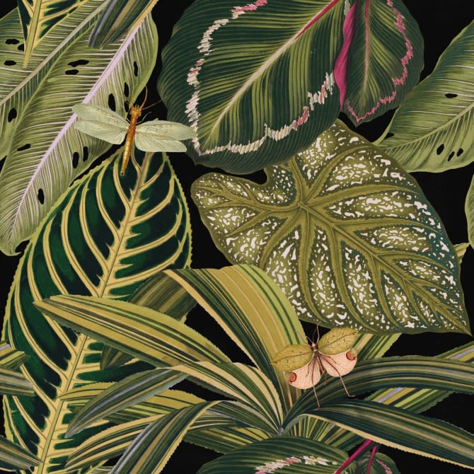 Amazonia Wallpaper by Mind The Gap