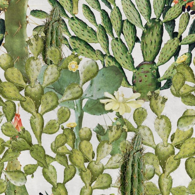Mind The Gap,Wallpapers,barbary fig,botany,cactus,eastern prickly pear,flower,flowering plant,nopal,plant,prickly pear
