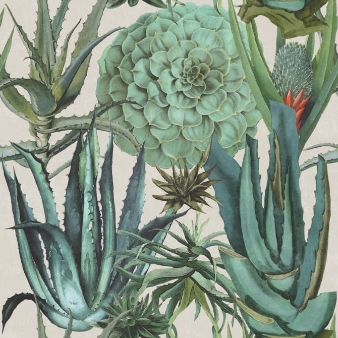 Mind The Gap,Wallpapers,agave,aloe,botany,cactus,flower,flowering plant,plant,terrestrial plant